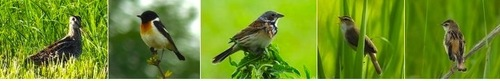 草原性鳥類.jpg